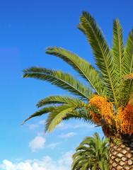 Palmier sous le ciel méditerranéen