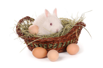 white baby rabbit and eggs in a basket