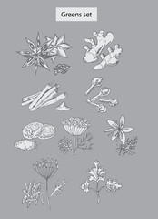 greens and spices set hand drawn illustrations