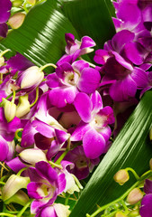 decoration for greeting card from the orchids