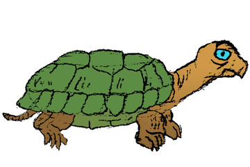 Colored Hand-drawn Sketch of Turtle