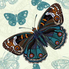 Beautiful butterfly on a seamless background