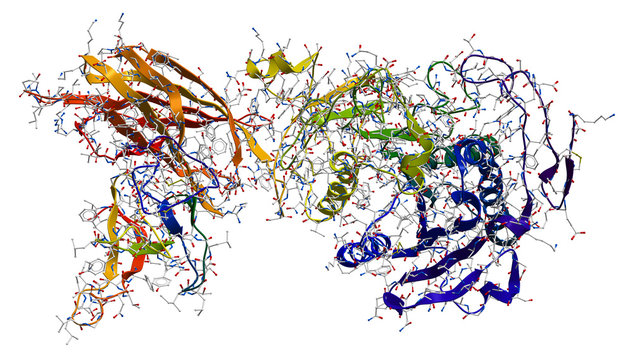 Enzyme pancreatic lipase-colipase complex