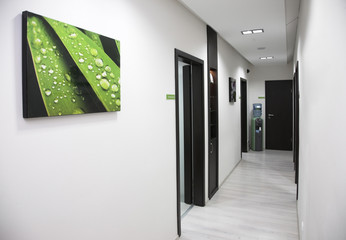 White wall hallway, brown doors, green leaf picture on wall