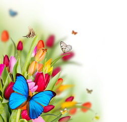 Beautiful butterflies on spring blossoms