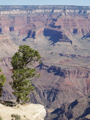 Grand Canyon with a big tree