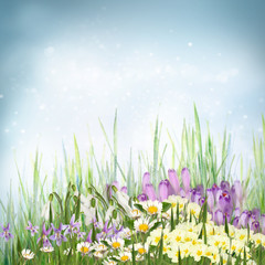 Spring floral background with spring symbol flowers