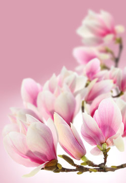 photo of magnolia