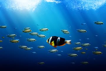 Swim against the Stream