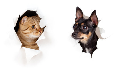 Papier Peint - cat and dog in paper side torn hole isolated