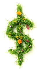 Dollar sign made of flowers and grass