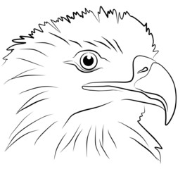 eagle head isolated on white background, vector illustration