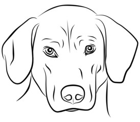 dog isolated - freehand, vector illustration