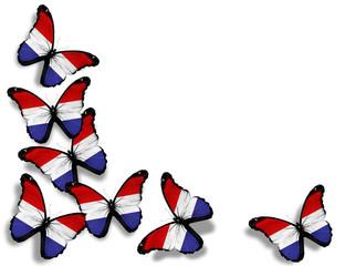 Netherlandish flag butterflies, isolated on white background