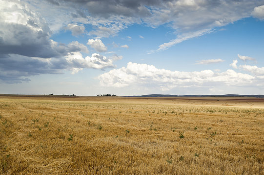 Stubble field in an agricultural landscape