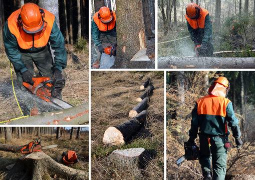 Woodcutter, forest work set