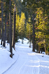 Sunlit Winter Road in Forest