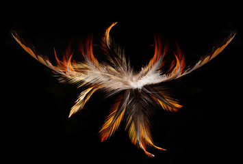 red feathers on a black background