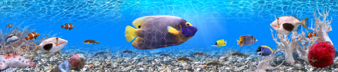 Foto op Plexiglas Onder water Underwater world - panorama