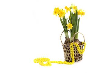 нарцисс в корзине и желтые бусы