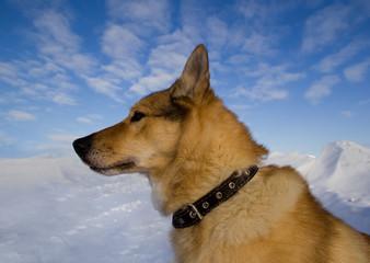 Portrait of a dog collar in profile