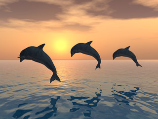 Photo sur Aluminium Dauphins Jumping Dolphins