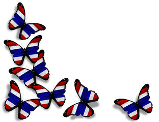 Thai flag butterflies, isolated on white background