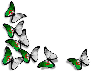 Algerian flag butterflies, isolated on white background