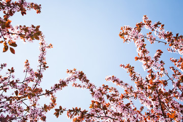branches with spring flowers