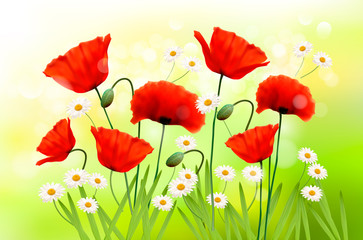 Spring background with red poppy and daisy. Vector