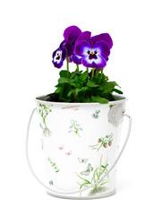 pansies in a beautiful bucket