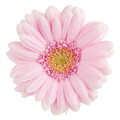 Photo sur Plexiglas Gerbera Pink gerbera flower