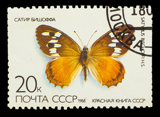 USSR - CIRCA 1986: A stamp printed in USSR, shows Butterfly Saty