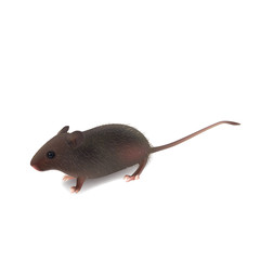 fluffy wild little gray mouse (EPS 8) on white background