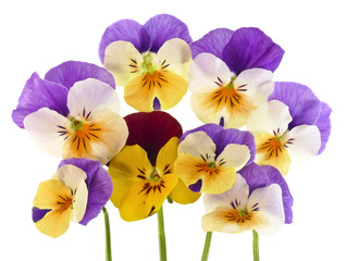 viooltje bloemen