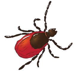 House dust mite