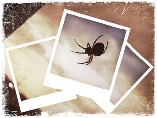 Polaroid collage of spider