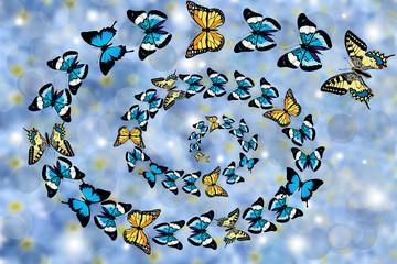 Butterflies swirling