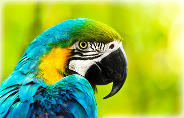 Poster Papegaai Exotic colorful African macaw parrot