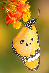 Splendid and beautiful butterfly with beautiful flower