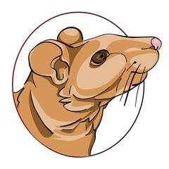 rat sign