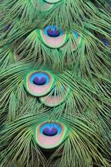 texture plume de paon