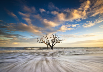 Charleston SC Ocean Oak Tree Edisto Island Beach South Carolina
