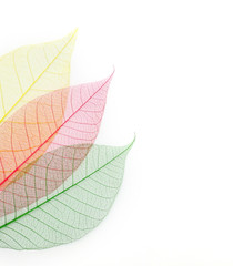 colored skeleton leafs abstract background