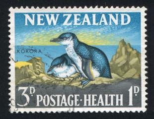 penguin korora