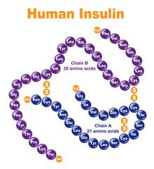 Human Insulin.