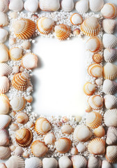 border summer shells frame