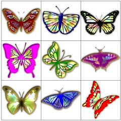 butterfly butterflies color design