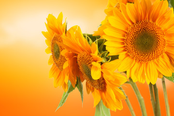 sun and summer