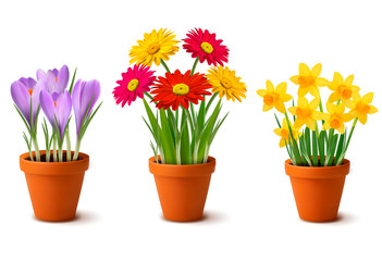 Spring colorful flowers in pots. Vector